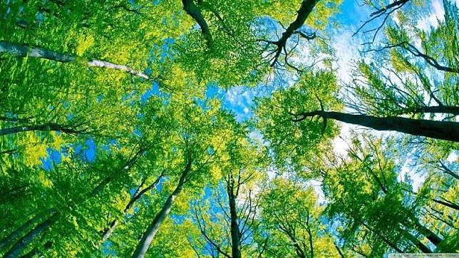 Gaya Hidup Sederhana yang Bisa Selamatkan Lingkungan, Coba Mulai Sekarang!