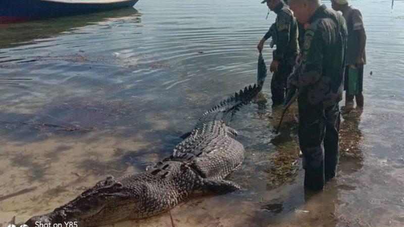 Akhir Pertarungan Sengit Buaya Versus Nelayan di Pantai Bolobonda Sulbar