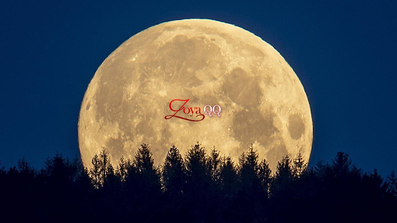 Kaitan Bulan Purnama dengan Lolongan Serigala, Simak Penjelasan Ahli